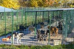 Psy w schronieniu Obraz Royalty Free