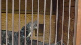 Psy w schroniskowym czekać na jedzeniu zdjęcie wideo