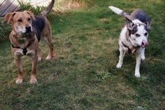 Psy w trawie zdjęcie royalty free