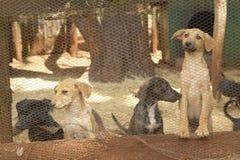 Psy w zwierzęcym schronieniu przy Nairobia, Kenja, Afryka Fotografia Royalty Free