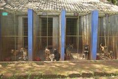 Psy w zwierzęcym schronieniu przy Nairobia, Kenja, Afryka Obrazy Royalty Free