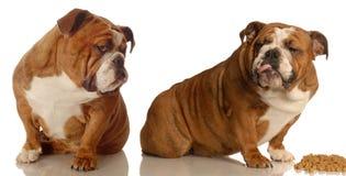psy walczy jedzenie nad dwa Zdjęcie Stock