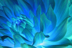 Psychedelic blue flower abstract Stock Image