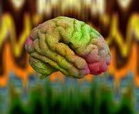 Psychedelic Brain Stock Image