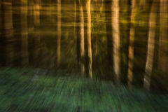 Psychedelic forest Stock Images