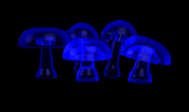 Psychedelic mushrooms Royalty Free Stock Photos