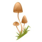 Psychedelic Mushrooms Royalty Free Stock Images