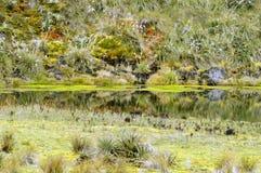 Psychedelische Landschaft in Kolumbien Lizenzfreies Stockfoto
