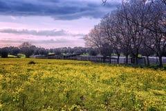 psychodeliczny krajobrazu fotografia stock