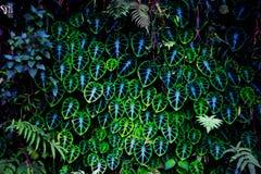 Psykedeliska växter Arkivbilder