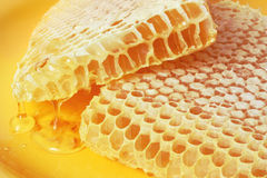pszczół honeycombs Zdjęcia Royalty Free