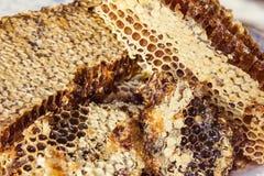 Pszczół honeycombs zakrywający z woskiem obrazy stock