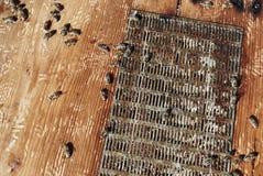 Pszczół ramy z pszczołami Zdjęcia Stock