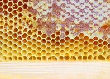Pszczół honeycombs Obraz Stock