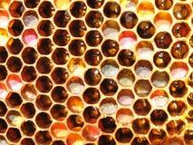 Pszczół honeycombs od roju Fotografia Stock