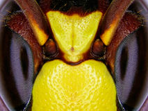 Pszczół oczy Zdjęcie Stock