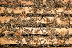 pszczół target65_1_ Obraz Stock