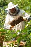 Pszczelarek spojrzenia przy ulem Miodowa kolekcja i pszczoły kontrola fotografia stock
