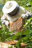 Pszczelarek spojrzenia przy ulem Miodowa kolekcja i pszczoły kontrola zdjęcia stock