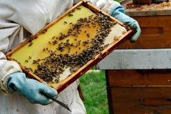 pszczelarka Obrazy Royalty Free