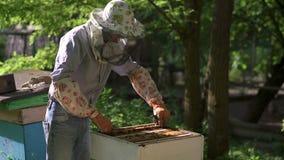 Pszczelarka delikatnie ciągnie out honeycomb od roju i spojrzenia przy nim zbiory wideo