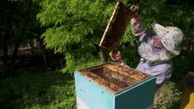 Pszczelarka delikatnie ciągnie out honeycomb od roju i spojrzenia przy nim Ogląda miodową komórkę dla obecności zbiory