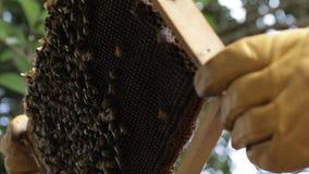 Pszczelarka miodu i apiarist produkci pszczoły rój zbiory wideo