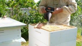 Pszczelarka na pasiece Pszczelarka pracuje z pszczo?ami i ulami na pasiece zdjęcie wideo