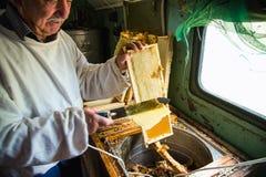 Pszczelarka oddziela wosk od honeycomb ramy Zdjęcie Stock