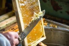 Pszczelarka oddziela wosk od honeycomb ramy Fotografia Royalty Free