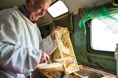 Pszczelarka oddziela wosk od honeycomb ramy Zdjęcie Royalty Free