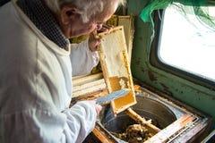 Pszczelarka oddziela wosk od honeycomb ramy Obraz Royalty Free