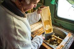 Pszczelarka oddziela wosk od honeycomb ramy Zdjęcia Stock