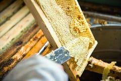 Pszczelarka oddziela wosk od honeycomb ramy Obrazy Stock