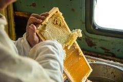 Pszczelarka oddziela wosk od honeycomb ramy Obraz Stock