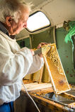 Pszczelarka oddziela wosk od honeycomb ramy Obrazy Royalty Free