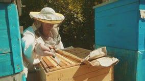 Pszczelarka pracuje w pasieka stylu życia pszczołach lata mrowia zwolnionego tempa wielo- barwionego ulowego wideo producent zbiory wideo