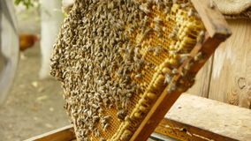 Pszczelarka pracuje z honeycombs zdjęcie wideo