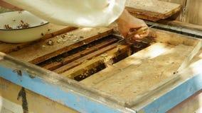 Pszczelarka pracuje z honeycombs zbiory wideo