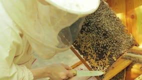 Pszczelarka pracuje z honeycombs zbiory