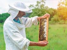 Pszczelarka pracuje z pszczołami i ulami na pasiece Pszczelarka na pasiece Beekeeping pojęcie zdjęcia stock
