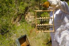 Pszczelarka przy pracą Obraz Royalty Free