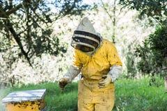 Pszczelarka, pszczoły lata blisko do honeycomb obrazy stock