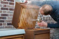 Pszczelarka sprawdza jego pszczoły kolonię używa dym Zdjęcie Stock