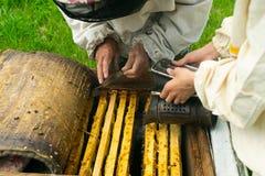 Pszczelarka sprawdza miodowe ramy pszczoły i ul Beekeeping praca na pasiece Selekcyjna ostro?? fotografia royalty free