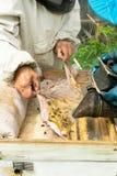 Pszczelarka sprawdza miodowe ramy pszczoły i ul Beekeeping praca na pasiece Selekcyjna ostro?? fotografia stock