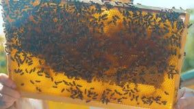 Pszczelarka styl życia trzyma honeycomb pszczoły pełno Pszczelarka Sprawdza Honeycomb ramę Przy pasieką Beekeeping pojęcie zbiory