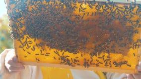 Pszczelarka styl życia trzyma honeycomb pszczoły pełno Pszczelarka Sprawdza Honeycomb ramę Przy pasieką Beekeeping pojęcie zbiory wideo