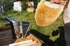 Pszczelarka tnący kawałek larwy honeycomb w pasiece out Obrazy Royalty Free