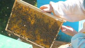 Pszczelarka trzyma honeycomb folował styl życia pszczoły Pszczelarka Sprawdza Honeycomb ramę Przy pasieką Beekeeping pojęcie zbiory wideo